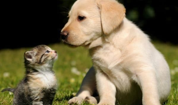 vaccinazioni cane gatto