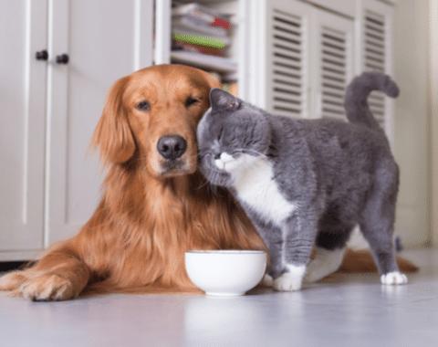 Idee green, progetti fai da te e consigli per cani e gatti