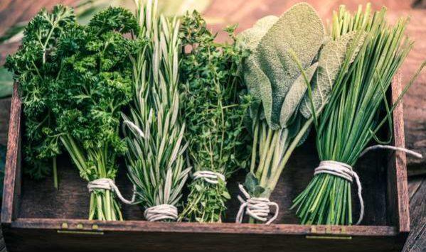 Erbe aromatiche tra salute e cucina