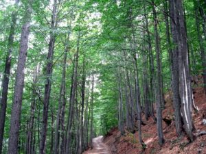 Prevenire e curare il disturbo da mancanza di natura