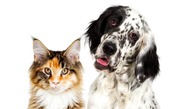 convivenza cani gatti
