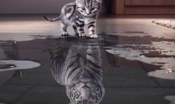 Il gatto: una tigre nel salotto